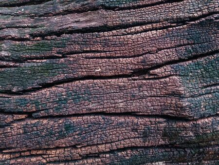 old wooden plank of tree bark