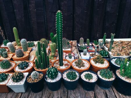 Cactus on wooden background, Cactus in pot background