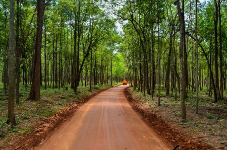 Dirt road in the forest. Deciduous forest. Trees against a cloudy sky. Trail in the park. The way forward Stock Photo