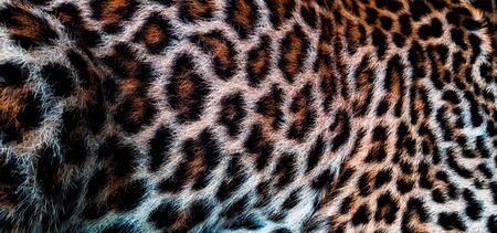 leopard skin pattern animal backgrounds