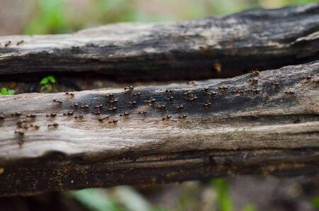 termite walking on old log