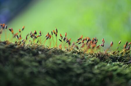 Spores of moss, Moss grows in the forest