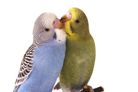 feathering: bird