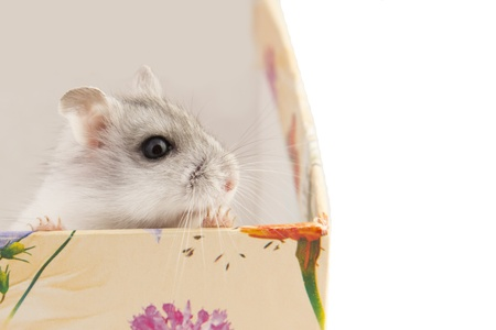 hamster sitting in a box photo