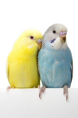 two birds are on a white background photo