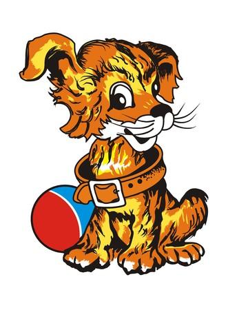 boll: little playful dog