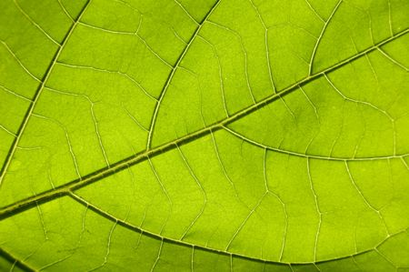 green leaf Stock Photo - 2736524