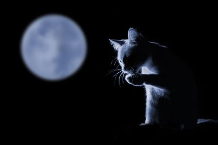 cat against moonlit night background Stock Photo - 2767506