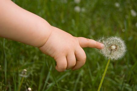 mano touch: bambino toccare la mano a dandelion