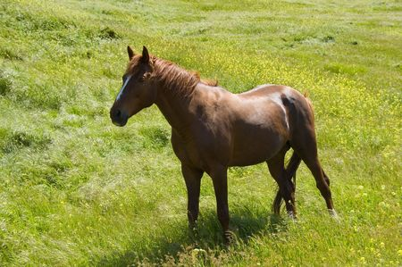 horse on the meadow photo