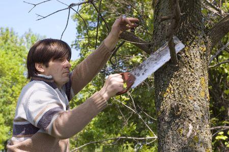 serrucho: hombre serrando una rama de �rbol con una sierra de mano Foto de archivo
