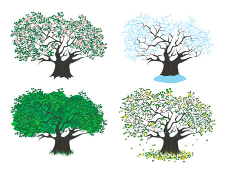 four seasons apple tree Vector