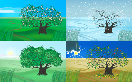 tree and four seasons Vector