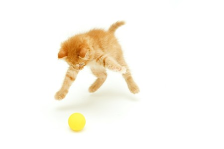 attention grabbing: funny red kitten hunts for ball isolated on white background