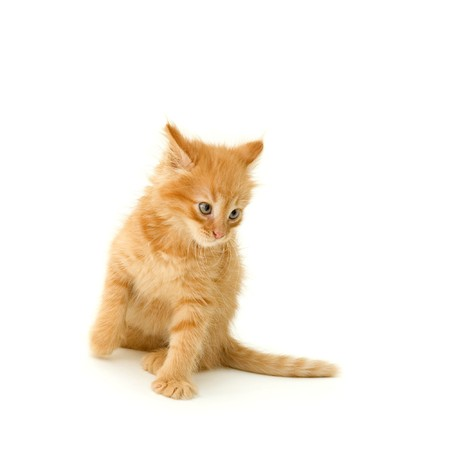 slink: kitten cute red attack isolated on white background Stock Photo