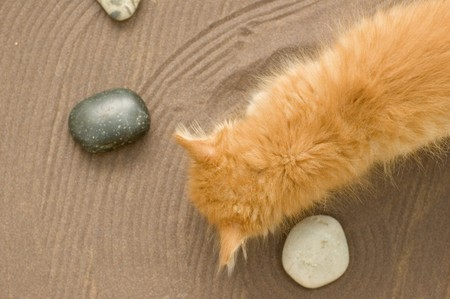 red kitten in garden of sand and stones photo