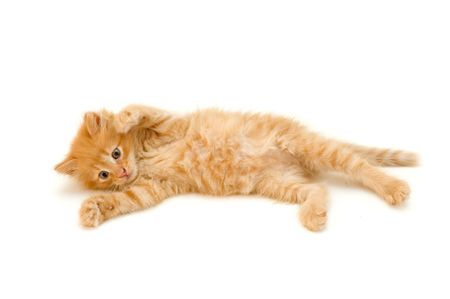 attention grabbing: kitten red funny playful isolated on white background Stock Photo