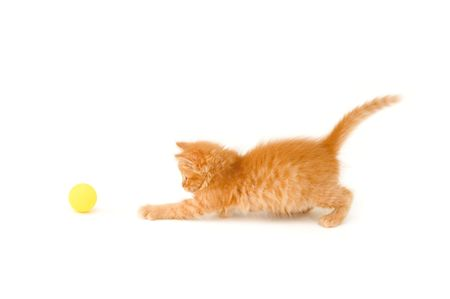 attention grabbing: kitten funny red catch ball isolated on white background