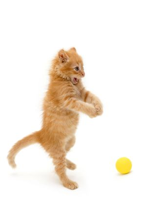 yellow tail: kitten funny red catch ball isolated on white background