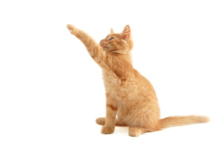 attention grabbing: kitten jumping isolated on white background