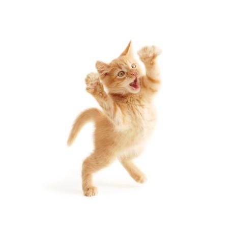 gevangen: kitten springen geïsoleerd op witte achtergrond Stockfoto