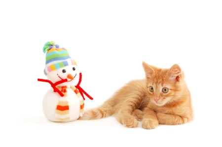 attention grabbing: kitten with toy snowman isolated on white background