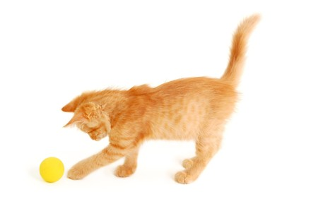 hunter playful: kitten funny red catch ball isolated on white background