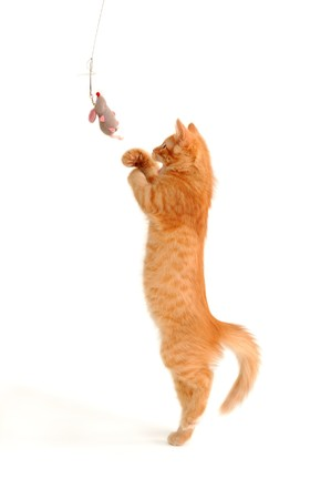 kitten playing with toy mouse isolated on white background photo