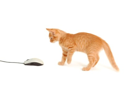 kitten playing with computer mouse isolated on white background photo