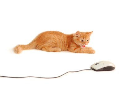 kitten spits to computer mouse isolated on white background photo