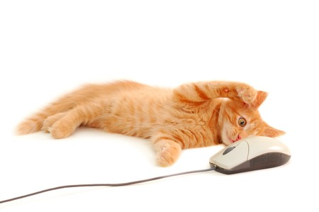 attention grabbing: kitten playing with computer mouse isolated on white background