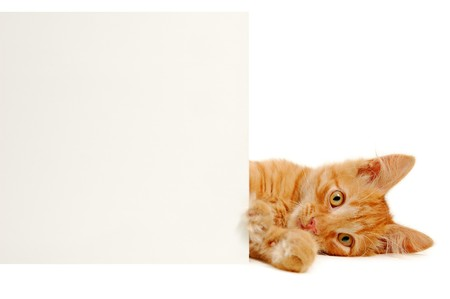 notices: banner in kittens paws isolated on white background