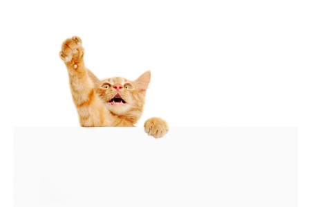 kitten speaker holding blank banner isolated on white background photo