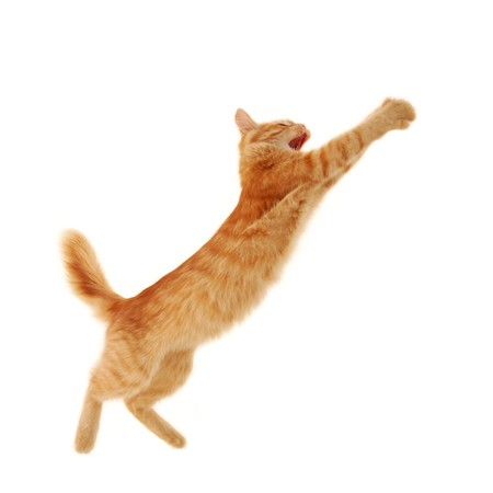 furry tail: kitten jumping isolated on white background  Stock Photo