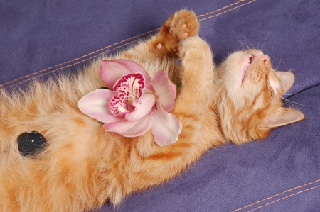 spa kitten sleeps with flower and stones on sofa photo
