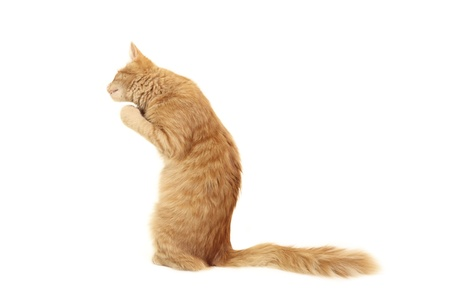 attention grabbing: kitten funny red  isolated on white background