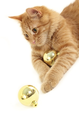 attention grabbing: cat with christmas ball isolated on white background