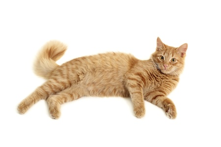 hunter playful: cat plaful isolated on white background