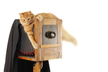 working animal: cat retro photographer with vintage camera in studio isolated on white background