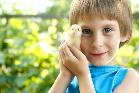chiken: boy cute hugs chiken in hand nature summer sunny outdoor Stock Photo