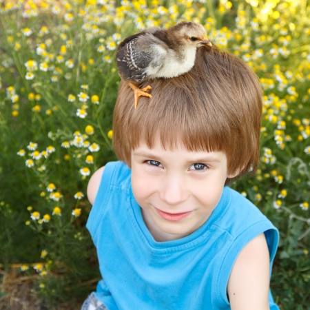 chiken: boy cute with chiken on his head nature summer sunny outdoor Stock Photo