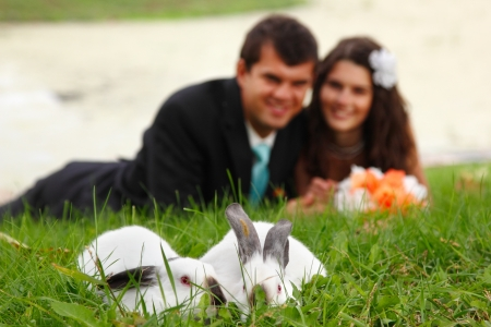 wedding, young bride kiss groom in love lying on green grass with two rabbits in the foreground, park summer outdoor photo
