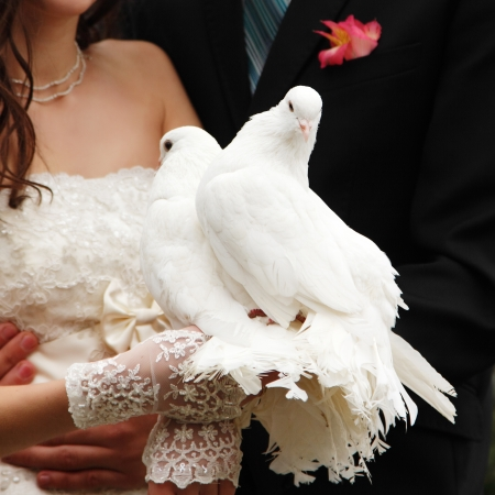 pair of white pigeons in grooms and brides hands photo