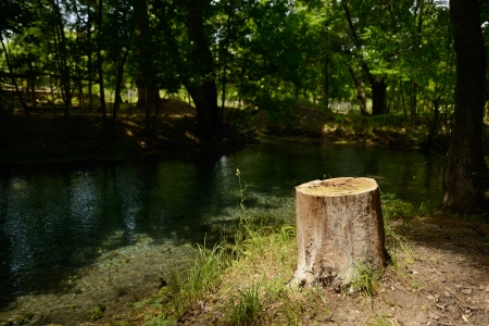 river in forest with stump foreground, summer nature outdoor