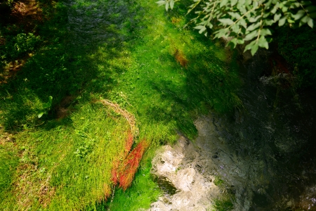 algae: flowing water of river in mountain forest, summer nature outdoor