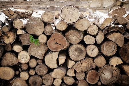 fire wood, log, billet  photo