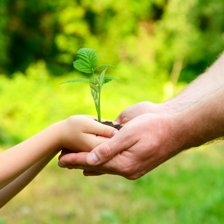 Fathers and sons hands holding green growing plant over nature background. New life, spring and ecology concept