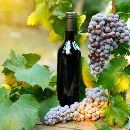Wine concept. Food and drink background with red wine, fresh bunch of grapes and wine bottle over nature background photo