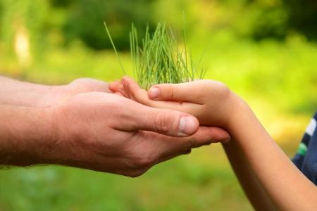 Padre y las manos del hijo que sostiene la planta verde que crece sobre fondo de naturaleza