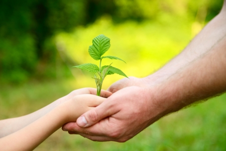 Father's and son's hands holding green growing plant over nature background Foto de archivo